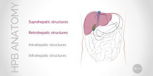 Update on Conventional Hepato-Pancreato-Biliary (HPB) Anatomy (Part I)