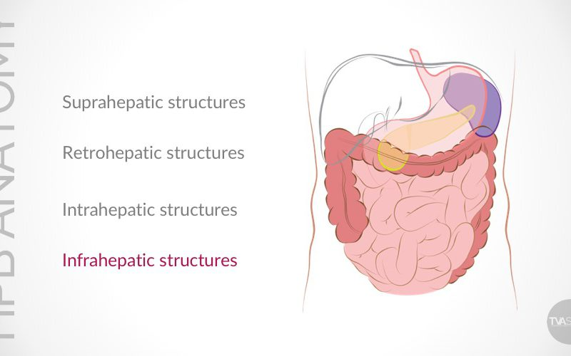 Update on Conventional Hepato-Pancreato-Biliary (HPB) Anatomy (Part III)