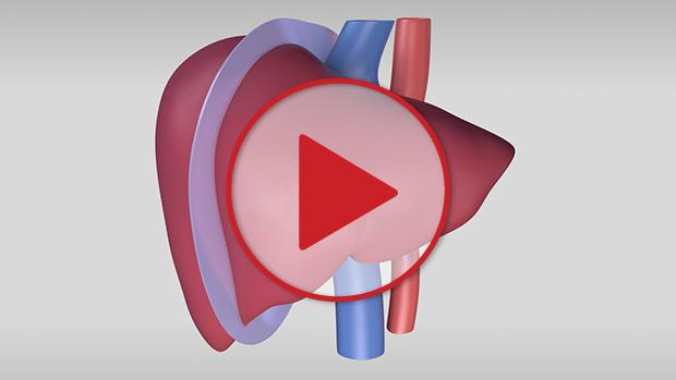 toronto general hospital canada pancreas transplant guidelines