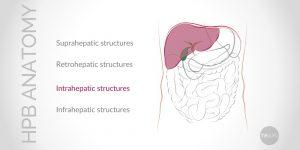 Update on Conventional Hepato-Pancreato-Biliary (HPB) Anatomy (Part II)
