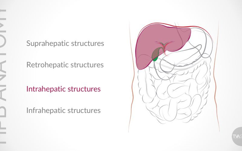 Update on Conventional Hepato-Pancreato-Biliary (HPB) Anatomy (Part II)